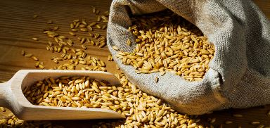 Post-harvest processing of grain
